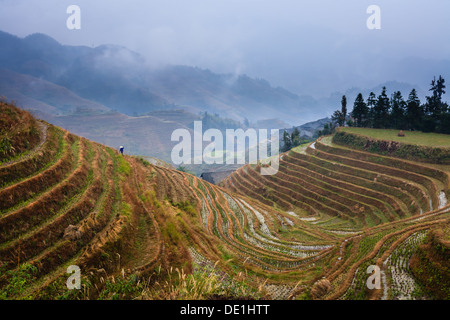 Famous 500 year old contoured rice terraces on the misty mountain slops of Longsheng, China, tended by hand in traditional - Stock Photo