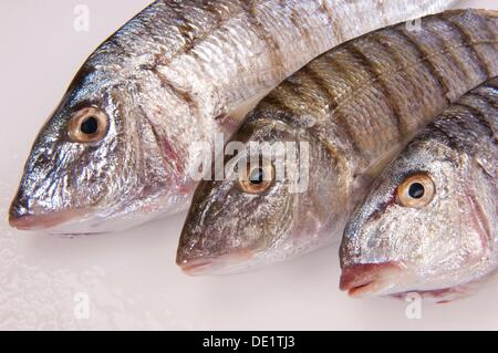 Three saltwater fish on a white table placed beside one another - Stock Photo