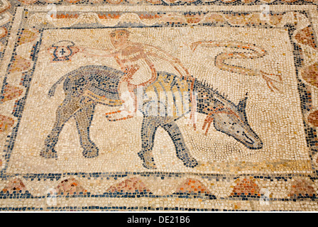 fine arts, ancient world, Roman Empire, Volubilis, Roman city, mosaic, Morocco, Artist's Copyright has not to be - Stock Photo