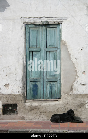 A black stray dog lying next to a blue wooden door on the street in Cotacachi, Ecuador - Stock Photo