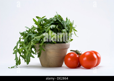 Rucola or Rocket salad and tomatoes on the vine - Stock Photo