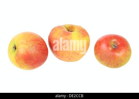 Apples, Rheinische Schafsnase variety, traditional sort for producing cider - Stock Photo