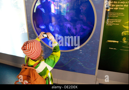 A child taking a photo of jellyfish, London zoo aquarium, London UK - Stock Photo