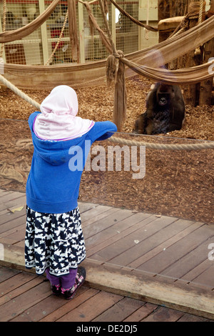 An arab child looking at a gorilla in ZSL London Zoo, Regents park, London UK - Stock Photo