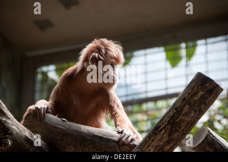 A little monkey at Berlin Zoo looking a little lonely.....