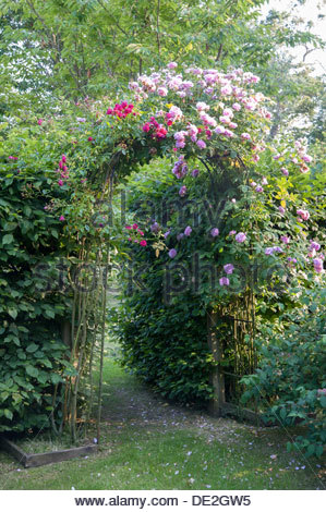 Rose Arch Stock Photo Royalty Free Image 77223810 Alamy