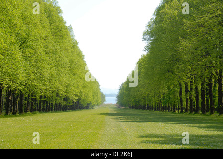 Fresh green, park, with forest aisle and lawn at Herrenchiemsee in the spring, Herreninsel island, Lake Chiemsee, - Stock Photo