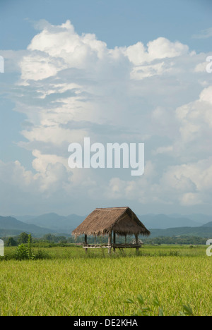 Simple hut in a green rice field, bamboo hut, storm clouds, province of Luang Namtha, Northern Laos, Laos, Southeast - Stock Photo