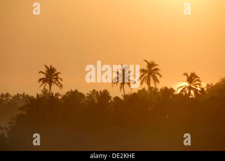 Sunrise above coconut trees, Talalla at Dondra, Indian Ocean, Ceylon, Sri Lanka, South Asia, Asia - Stock Photo