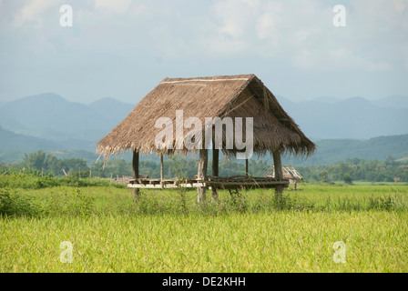 Simple hut in a green rice field, bamboo hut, province of Luang Namtha, Northern Laos, Laos, Southeast Asia, Asia - Stock Photo