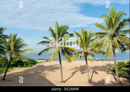 Beach with palm trees, Indian Ocean, Negombo, Sri Lanka - Stock Photo