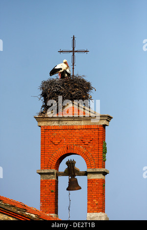 White Stork (Ciconia ciconia), pair in nest on a bell tower, National Park Monfrague, Exdremadura, Spain, Europe - Stock Photo