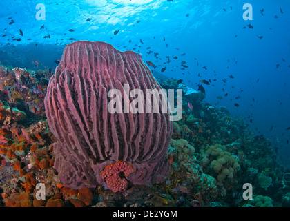 Coral reef seascape featuring large red barrel sponge with blue water background. Verde Island, Philippines. - Stock Photo