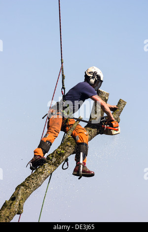 Tree surgeon at work bringing down a tree. Wiltshire England. - Stock Photo