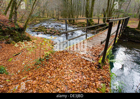Bridge over small river ´Curak´ in Zeleni vir park near town Skrad (Gorski kotar county). Croatia. Autumn. - Stock Photo