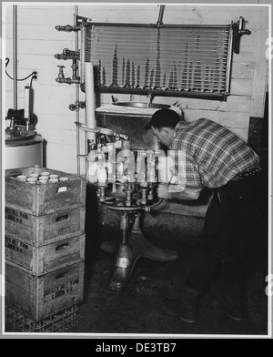 Landaff, Grafton County, New Hampshire. Pasturizing and bottling at Mr. George Clement's farm. He an . . . 521496