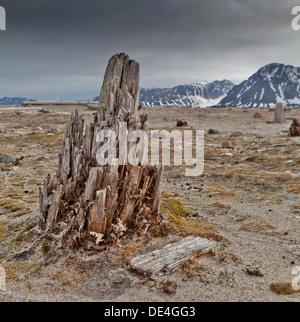 Wooden remains, Smeerenburg, Spitsbergen Island, Svalbard, Norway - Stock Photo