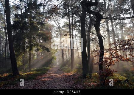 Path through a misty mixed forest in autumn, Weinbiet, Neustadt an der Weinstraße, Baden-Württemberg, Germany - Stock Photo