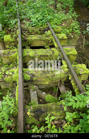 Old narrow-gauge railway tracks overgrown with moss and plants - Stock Photo