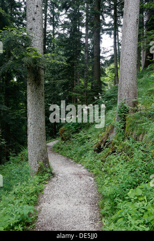 Hiking trail in a forest - Stock Photo