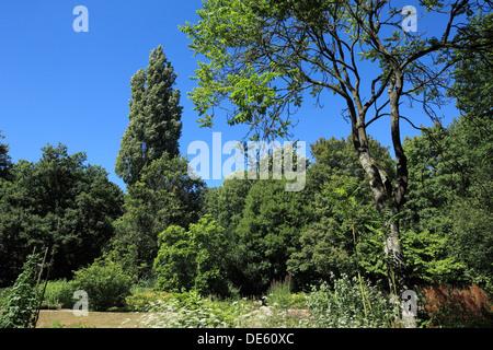 Botanischer Garten der Ruhr-Universitaet Bochum, Ruhrgebiet, Nordrhein-Westfalen - Stock Photo