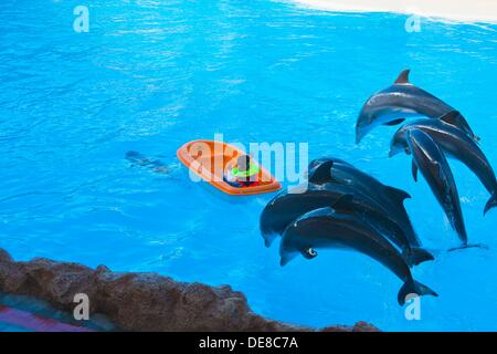 Dolphin Show  Loro Parque  Puerto de la Cruz  Tenerife  Canary Islands  Spain. - Stock Photo
