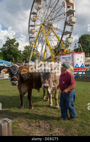 Chatham, New York - Ralph Hartzell demonstrates his oxen to visitors at the Columbia County Fair. - Stock Photo