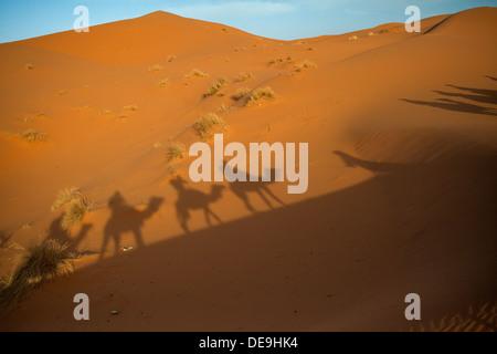 Camal caravan on a trip through the Sahara desert - Stock Photo