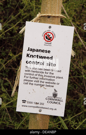 Japanese Knotweed control site warning sign in Cornwall England UK - Stock Photo