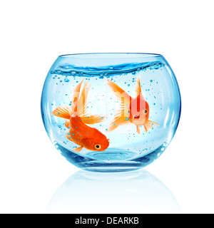 Goldfish in aquarium isolated on white background. - Stock Photo