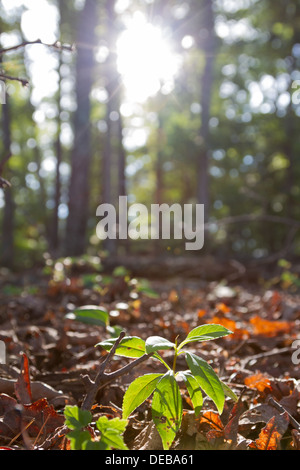 Sun shines through trees onto a forest floor - Stock Photo