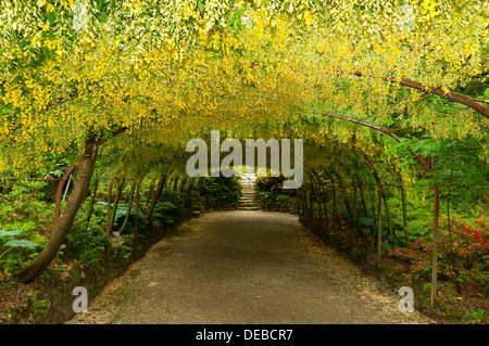 Pleasant Laburnum Arch Bodnant Gardens Conwy Wales Stock Photo Royalty  With Foxy Laburnum Arch Bodnant Gardens Conwy Wales  Stock Photo With Appealing Scotsdales Garden Centre Also Sloping Garden In Addition China Garden Phone Number And Asia Gardens As Well As Plum Garden Toys Additionally Eaton Hall Gardens From Alamycom With   Foxy Laburnum Arch Bodnant Gardens Conwy Wales Stock Photo Royalty  With Appealing Laburnum Arch Bodnant Gardens Conwy Wales  Stock Photo And Pleasant Scotsdales Garden Centre Also Sloping Garden In Addition China Garden Phone Number From Alamycom