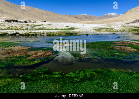 Hot springs, Korzok, Ladakh, Jammu and Kashmir, India - Stock Photo