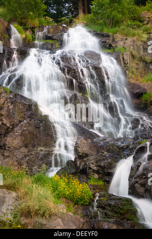 Todtnauer Waterfalls with yellow flowers, Black Forest, Germany - Stock Photo