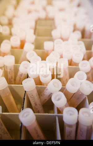 Water samples. Plankton laboratory. AZTI-Tecnalia. Technological Centre specialised in Marine and Food Research. - Stock Photo