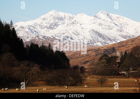 Mount Snowdon capped with snow as Welsh sheep graze on a sunny spring day  in Snowdonia National Park, Wales, United Kingdom