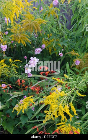 Colorful random tangle of mixed border flowers intertwined leaning over partly due to rain and wind - Stock Photo