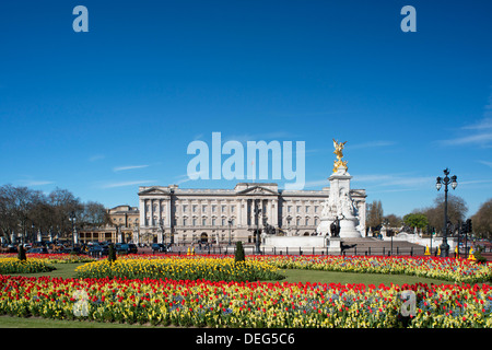 Red and yellow tulips growing in front of Buckingham Palace in April. London, England, United Kingdom, Europe - Stock Photo