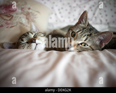 Two kittens sleeping together - Stock Photo