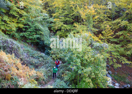 Two hikers on a path through European Beech forest (Fagus sylvatica). Montseny Natural Park. Catalonia. Spain. - Stock Photo