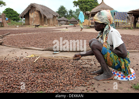 Gonja Ethnic Woman In Ghanaian Village Beating Shea Nuts To Crack The Outer Shell - Stock Photo