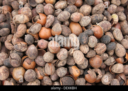 Pile Of Shea Nuts An Important Cash Crop In Ghana - Stock Photo