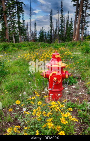 Red fire hydrant in forest - Stock Photo
