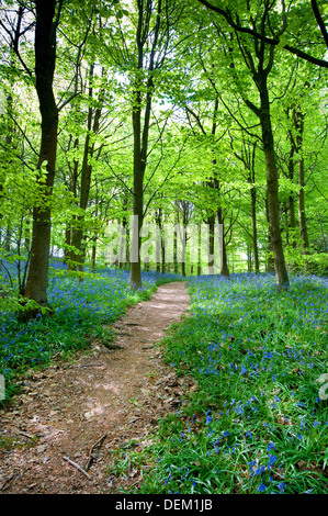 mariners; hill; Westerham; Kent; England; UK; Europe; - Stock Photo