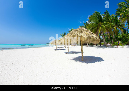 Beach chairs under a palm tree - Stock Photo