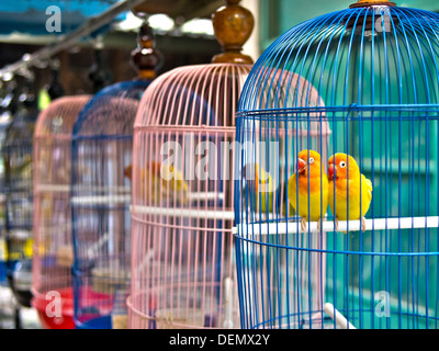 Parakeets in colorful cages for sale at bird market. - Stock Photo