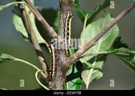 beautiful pests - Stock Photo