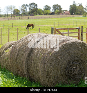 Rural Scene in the pampas. Agriculture and livestock. - Stock Photo
