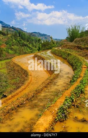 Rice field terrace at Cat Cat village near Sapa, Vietnam, Asia. - Stock Photo
