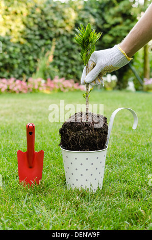 Planting new tree into the flowerpot in blooming garden - Stock Photo